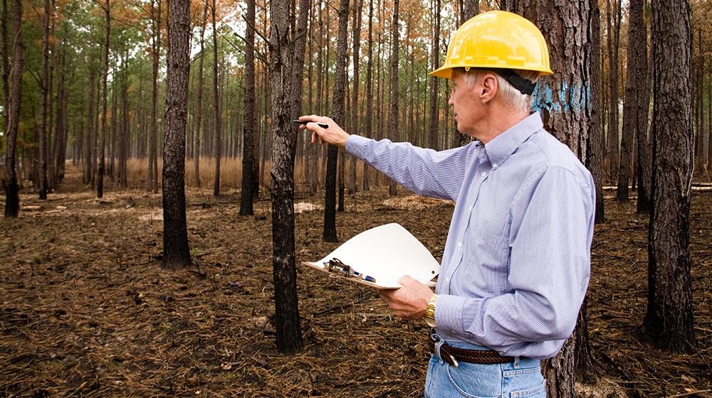 Beratung & Betreuung von Wald und Forst