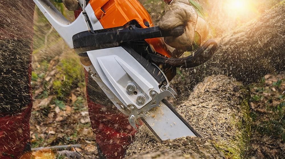 Holzernte mit Motor-Kettensäge