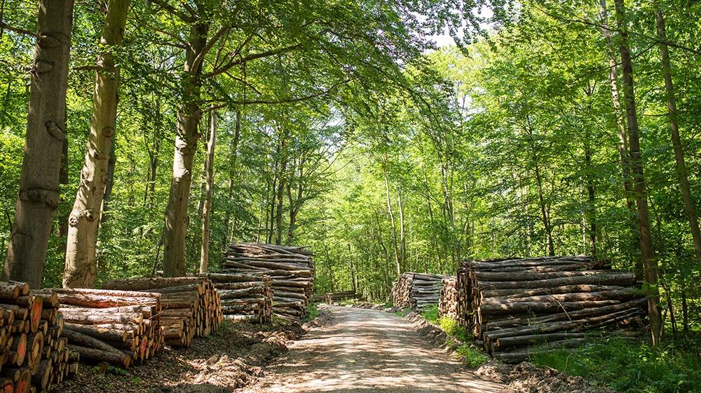 Rundholz Lagerung – Gefällte Baumstaemme