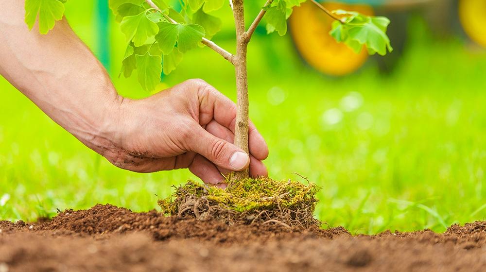 Nachhaltige Forst- & Waldwirtschaft