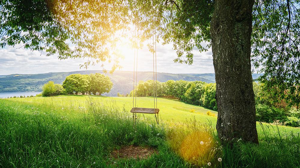 Planung & Pflege von Grünanlagen