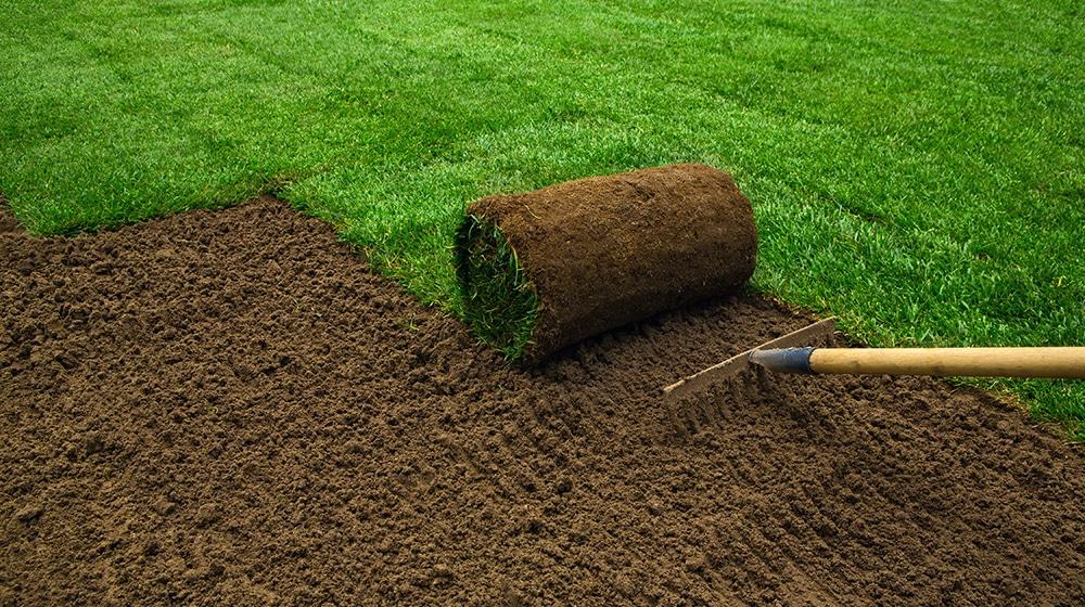 Rasen anlegen: Planung, Ausführung & Pflege