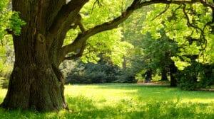 Bäume - Wichtig für Klima und Mensch
