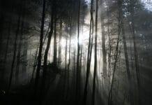 Waldzustandsbericht 2020